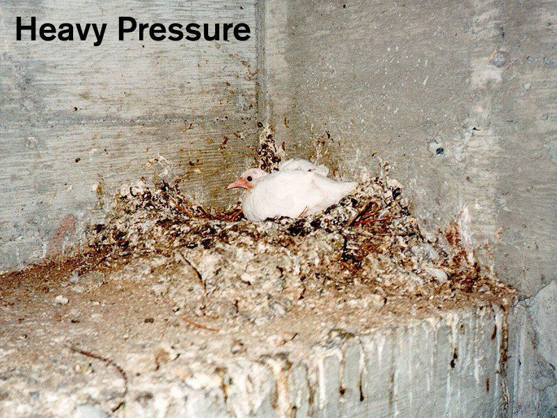 Heavy Bird Pressure