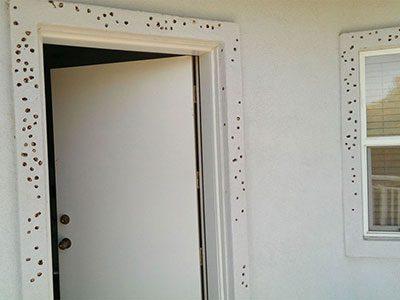 Woodpecker Damage to Wood Door Jamb and Window Frame